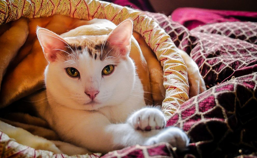 kucing termasuk binatang yang sangat bersih dari sisi kedokteran